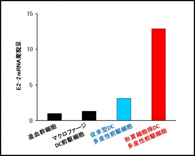 図2.DC前駆細胞におけるE2-2の発現