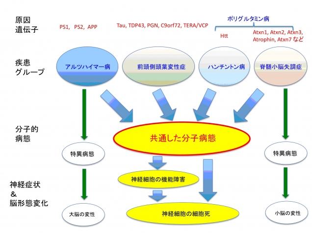 図1. 実験の概要。