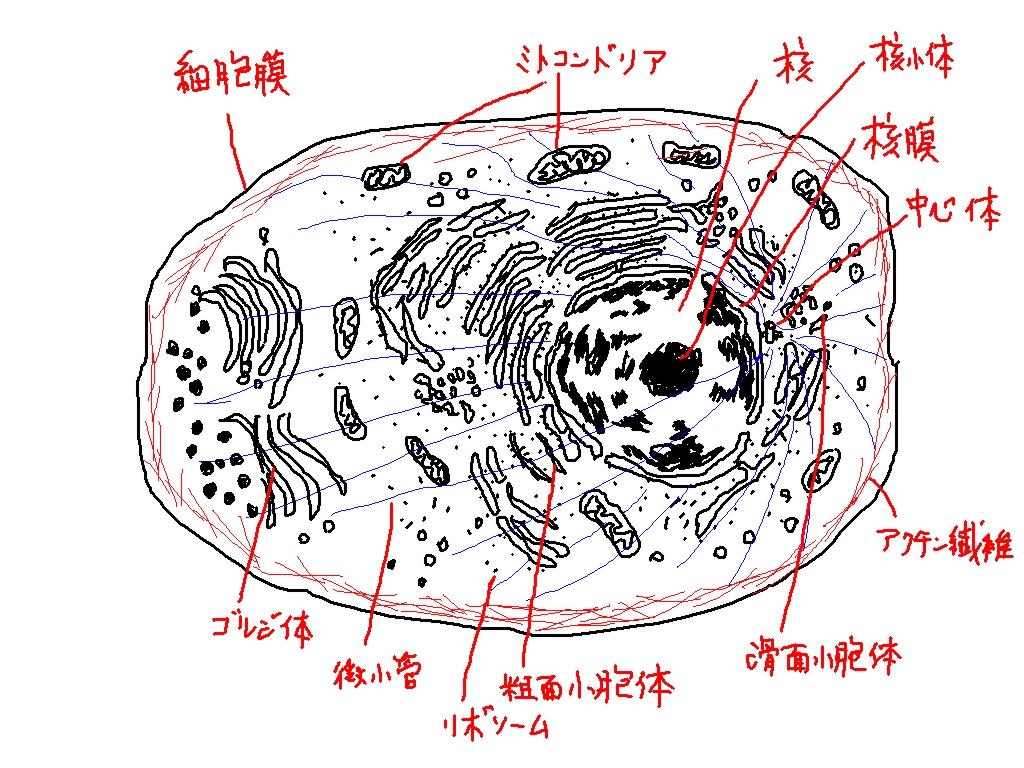 細胞 小 器官