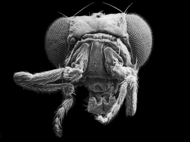 グロ画像 奇形 希少動物 UMA 未確認生物 怪物 怪獣 かえる
