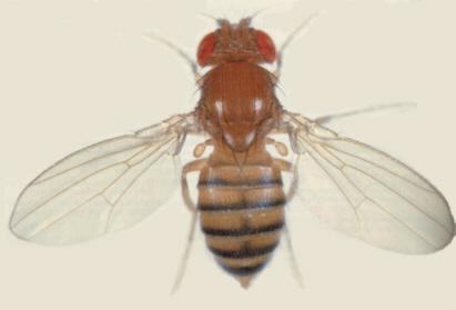 黑白复杂手绘图昆虫