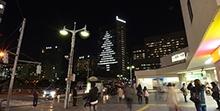 東京医科歯科大学M&Dタワーが高さ100メートルのクリスマスツリーに
