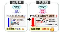 「母乳により脂肪の燃焼機能が発達する巧妙な仕組みを発見」【小川佳宏 教授】