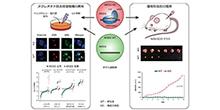 「肝がん変異遺伝子ARID2による発がんメカニズムを解明 」【田中真二 教授】