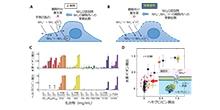 「水素イオンセンサーを用いて生体膜のバリア性を評価する新手法の開発」【合田達郎 助教】