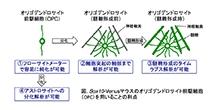 「遺伝子改変マウス(Sox10-Venusマウス)を用いた簡便なオリゴデンドロサイト(OPC)分化解析手法の開発」【赤澤智宏 教授】