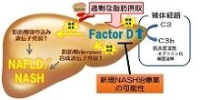 「脂肪肝の進行における補体Factor Dの役割を発見」【吉田雅幸 教授】