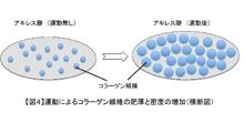 「運動に応答する腱の遺伝子メカニズムの解明」【浅原弘嗣 教授】