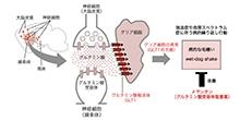 「自閉スペクトラム症などの病的な繰り返し行動を脳のグリア細胞の異常が引き起こす仕組みを解明」【田中光一 教授】