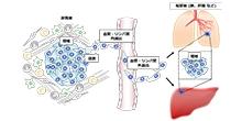 「がんの浸潤・転移を制御するハイプシン経路の分子機構の解明」【稲澤譲治 教授】