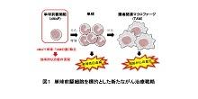 「単球の源細胞除去による新規がん治療法の開発」【樗木俊聡 教授】