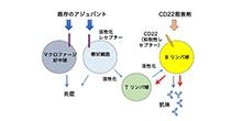 「炎症を起こさない免疫賦活剤の開発に成功」【鍔田武志 教授】