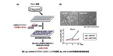 「難治性がんに腫瘍抑制効果を示すマイクロRNAを同定」【稲澤譲治 教授】