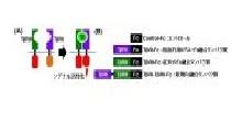 「がん悪性化因子を阻害する新規タンパク質を開発」【渡部徹郎 教授】