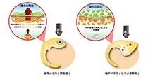 「3D臓器形成遺伝子の同定に成功」【仁科博史 教授】