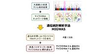 「疾患ゲノム情報に基づくマイクロRNAスクリーニング手法を開発」【岡田随象 講師】
