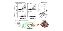 「低濃度TLR7アゴニスト投与は免疫チェックポイント療法の感受性を高める」【東みゆき 教授】