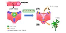 「血液脳関門を通過してアンチセンス核酸を中枢神経系に送達する新技術の開発」【横田隆徳 教授】