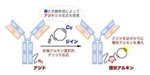 「様々な機能性分子をクリック反応性転換を用いて簡便に合成する手法を開発」【細谷孝充 教授】