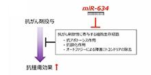 「マイクロRNA-634によるミトコンドリアを介したアポトーシス経路の活性化と化学療法の増強効果」【稲澤譲治 教授】