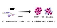 「マウスにおけるmiR-146bの欠損は造血器腫瘍を引き起こすことを発見」【淺原弘嗣 教授】