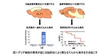 「てんかん発作の多様性を引き起こす仕組みをマウスで発見」【田中光一 教授】