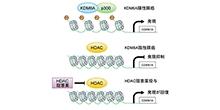 「予後不良膵癌サブタイプにおけるヒストン修飾遺伝子の不活化の意義を解明」【田中真二 教授】