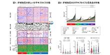 「肝細胞癌の分子生物学的・免疫学的サブタイプ分類を確立」【田中真二 教授】