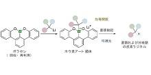 「有機ホウ素化合物と光エネルギーを活用した新しい有機合成技術を開発 」【細谷孝充 教授】