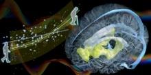 「ヒト脳の新しい加齢バイオマーカーを発見」【杉原玄一 准教授】