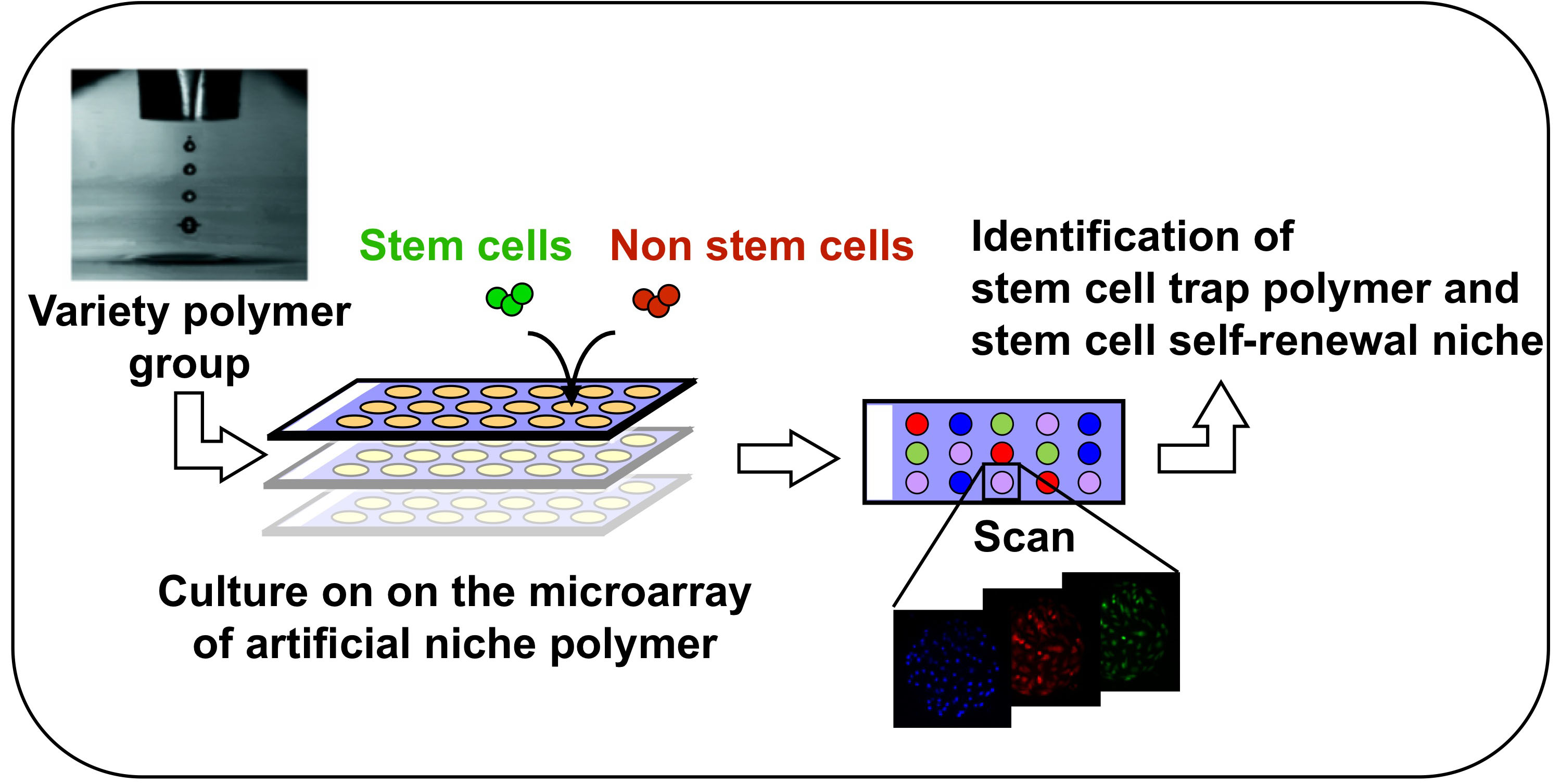 Stem cell research project?